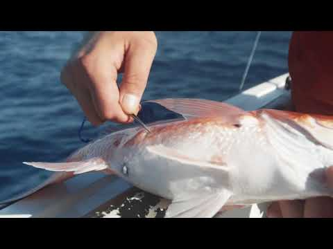 How To Properly Vent An Offshore Fish (With Capt. Dylan Hubbard)