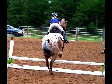 Horse Jump Show