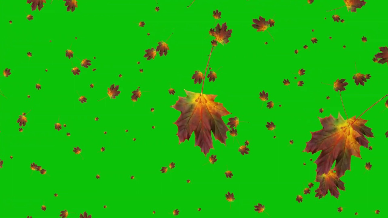 Autumn Leaves Falling Animation White Blue Green Screen Effect Youtube