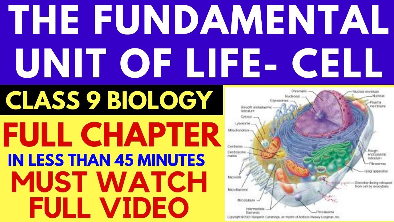 FUNDAMENTAL UNIT OF LIFE | CELL | CHAPTER 5 | CLASS 9 CBSE | FULL CHAPTER