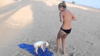 Собака решила раздеть девушку