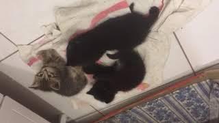 Смешно Прикол, котята испугались шуршания пакета.