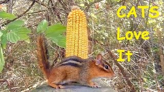 Entertainment Video For Cats and Dogs - Chipmunk Versus Corn Cob