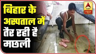 Fish Caught Swimming In Wards Of NMCH, Patna | ABP News