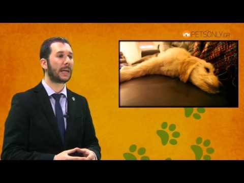 Σκύλος, κυριαρχία και επιθετικότητα ( Μέρος δεύτερο - Συμβουλές προς κηδεμόνες)