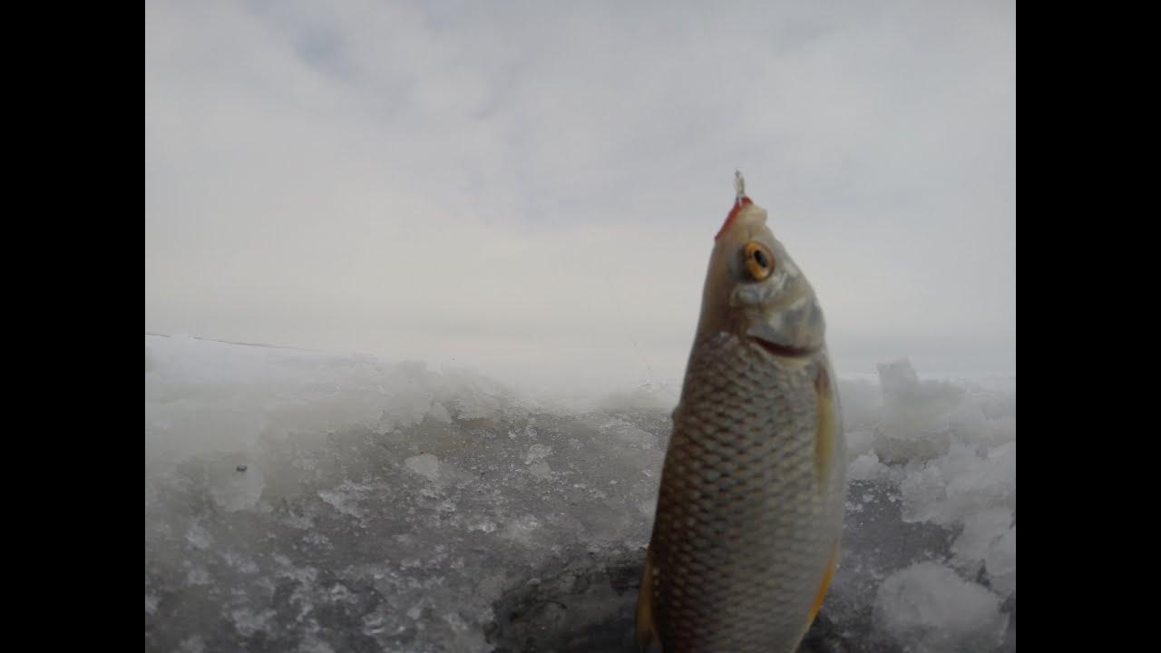 Ловля плотвы и густеры зимой на мормышку. Зимняя рыбалка 2016.