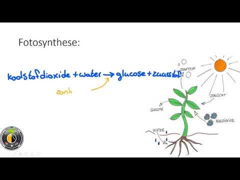 Ongekend Klas 1 mavo/havo - Uitleg 5.3 Fotosynthese (Nectar, PowerPoint ZG-67