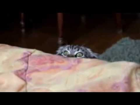 Sneaky Cat Spy Funny Catfunny Cats Videos YouTube - Sneaky cat got caught