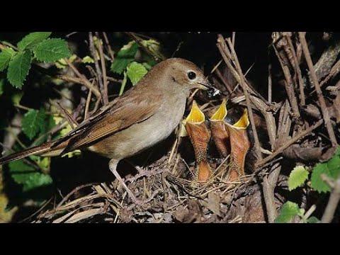 Вопрос: Какое растение Амазонии называют сковородка для птиц?