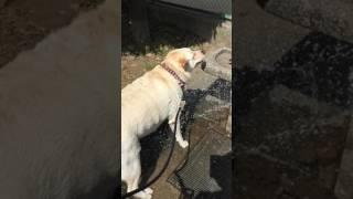 暑いので公園の水飲み場で犬に水を掛けていたら、少年野球の軍団をびっ...