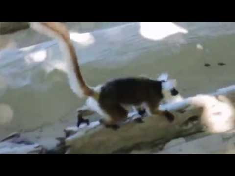 Our Madagascar Adventure