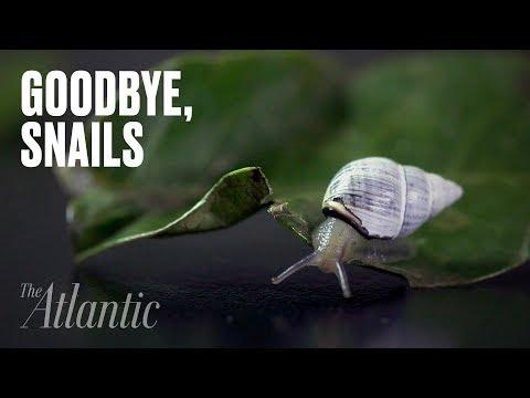 Goodbye, Snails