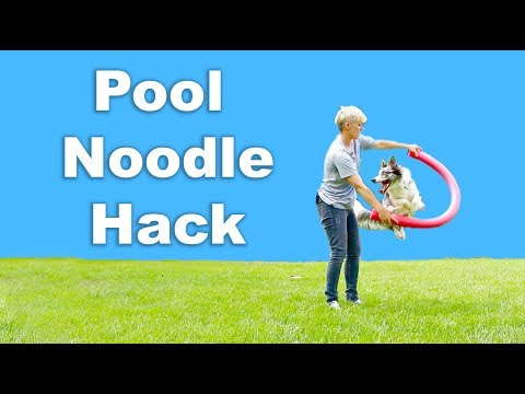 Pool noodle HACK for JUMPING tricks - Dog Tricks Training