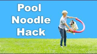 Pool noodle hack for dog training