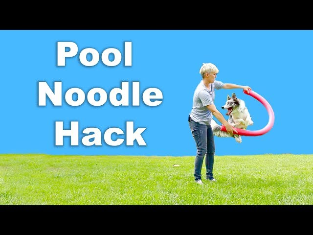 Pool noodle hack to teach jumping tricks