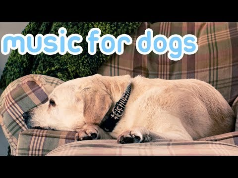 Calming Music for Dogs! Relax and Soothe Your Anxious or Sleepless Dog with Music!