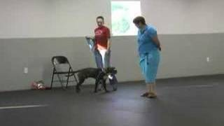 Dog Training Elkton Maryland Newark Bear Delaware