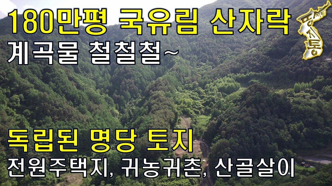 180만평 국유림 산자락 계곡물 철철철~ 독립된 명당토지,전원주택지,귀농귀촌,산골살이[땅지통]