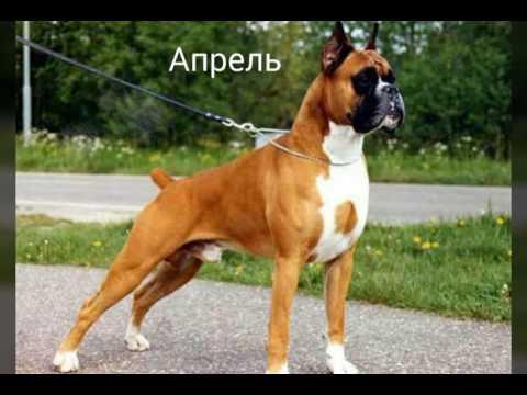 Как назвать собаку? Как назвать собаку? имя для собаки