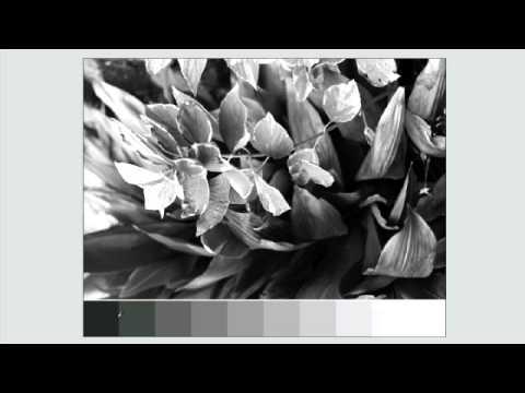 Exposure :: Photography Basics