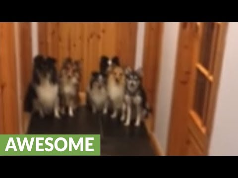 Obedient dogs line up for roll call, only come when called by name