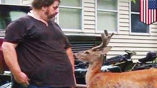 Мужчина оштрафован за содержание оленя в качестве домашнего питомца