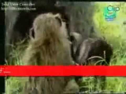 tập tính của khỉ