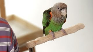 How To Use Food As A Training Tool | Parrot Training