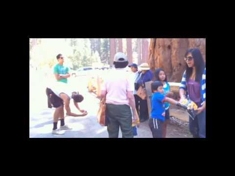 Family Trip To Sequoia National Park (Highlights)