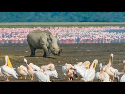 Masai Mara - Kenya (Safari) HD
