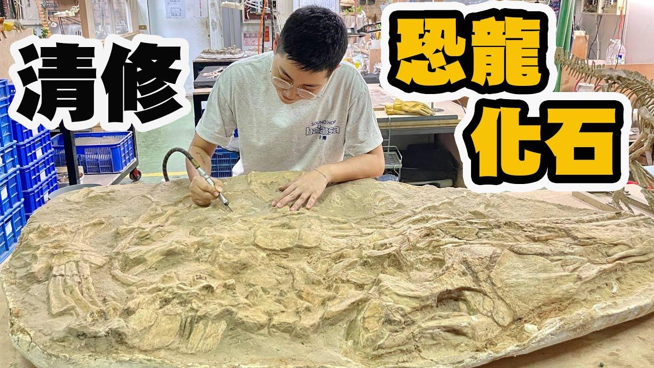 親手清修六千萬年前滄龍化石 台灣唯一暴龍化石原件清修組裝過程大公開!【昆蟲擾西上課了!】