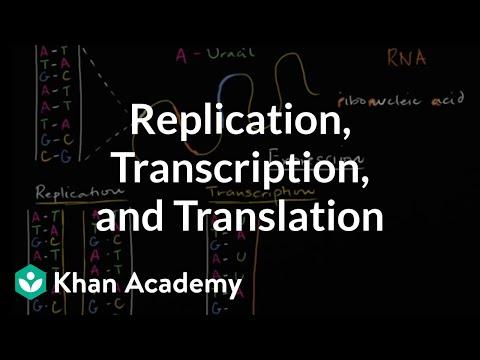 DNA replication and RNA transcription and translation | Khan Academy
