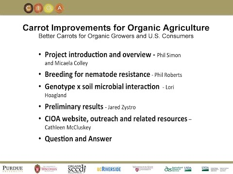 Carrot Improvement for Organic Agriculture