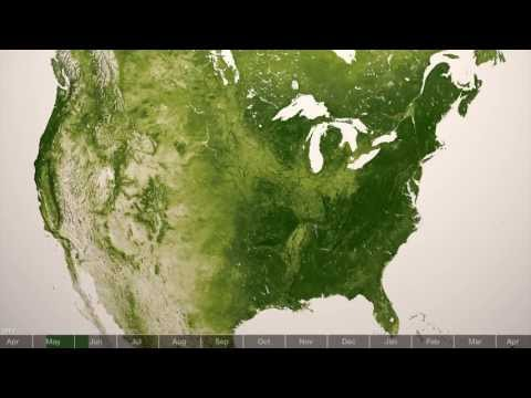 Going (Really, Really) Green: Earth's Plant Life, as Seen From Space