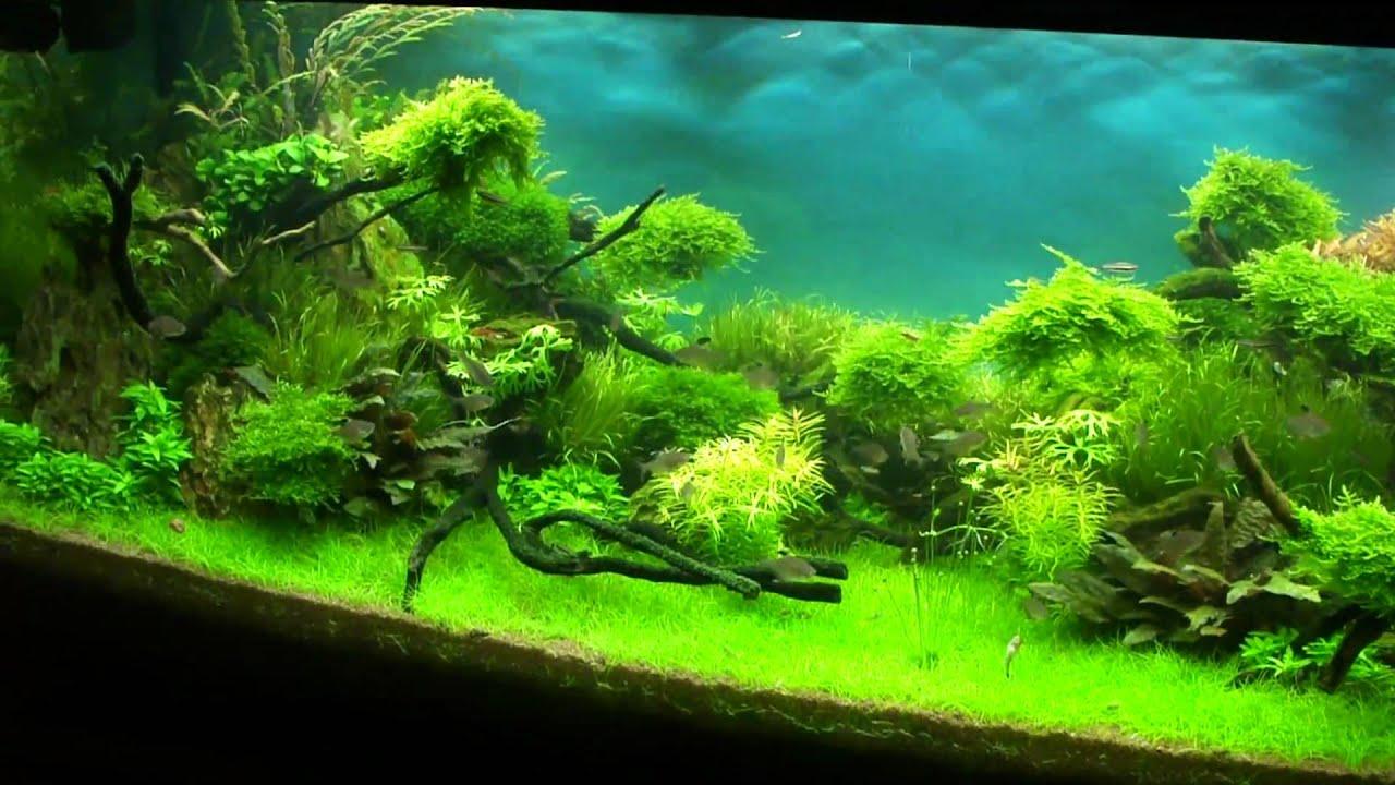 "Aquascape ""Forgotten World 2"" - YouTube"