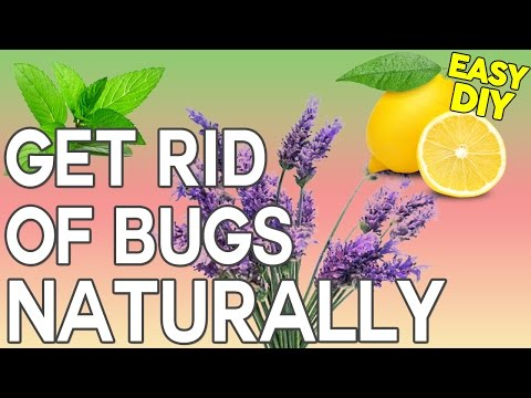 How To Get Rid Of Bugs: DIY Natural Bug Spray That's Safe For Children And Pets