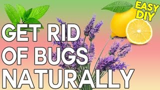 how to get rid of bugs diy natural bug spray thats safe for children and pets