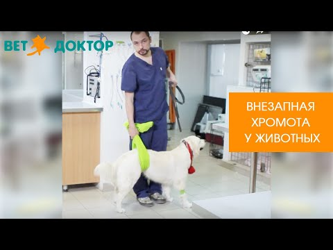 Болит лапа у собаки задняя лапа