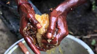 INDIA, HONEY HUNTERS - Honey of The untouchables FOR Ipod