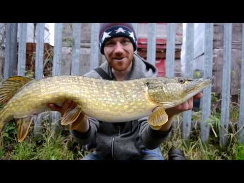 Pike CRUSH Big Swim Baits In This Murky Water