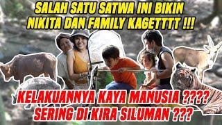Download Mp3 MENGUNJUNGI SATWA UNIK ASLI INDONESIA DARI YANG SERING DI KIRA SILUMAN SAMPAI YANG BIKIN LUCU