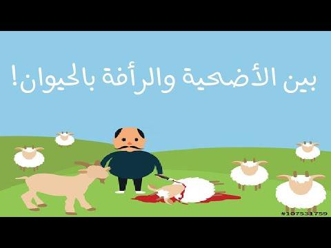 بين الأضحية والرأفة بالحيوان - عيد الأضحى