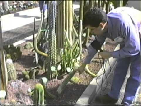 cactus y suculentas jard n bot nico madrid youtube