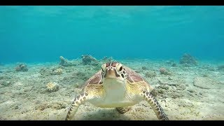 Marsa Alam Egypt Turtles Египет Черепахи Ägypten Schildkröten