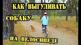 Как выгуливать собаку на велосипеде