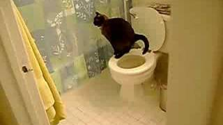 I trained my cat, Pepper, to use the toilet. No one believes me so ...