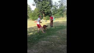 Rhodesian Ridgeback Training Utility And Defence