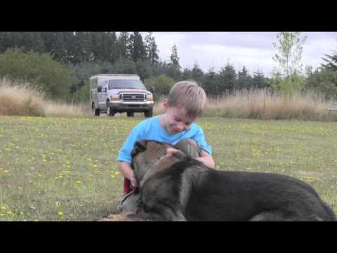 trained-ipo-versatility-protection-dog-with-children