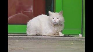В Нижнекамске продавец магазина схватила за хвост кошку, раскрутила и выбросила на дорогу