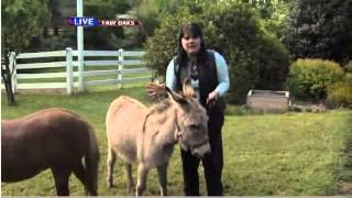 Donkeys as pets - Ask a vet with Dr. Jyl